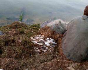 Виявлено чергове порушення в Очаківському районі, - Миколаївський рибоохоронний патруль