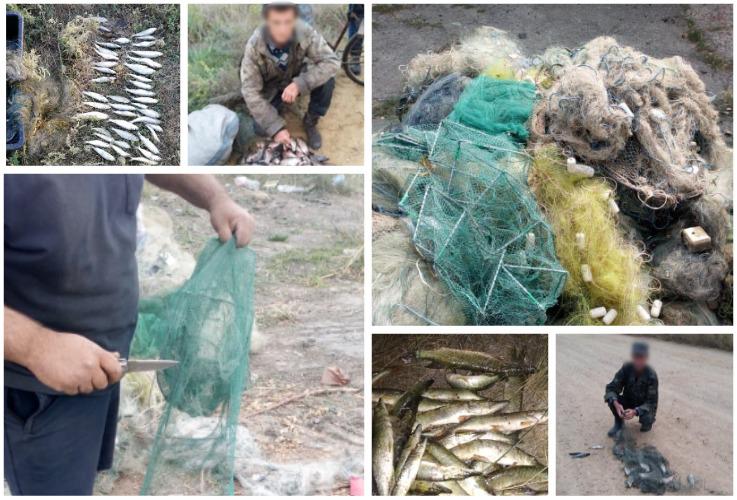 Протягом тижня вилучено 50 кг незаконно добутої риби
