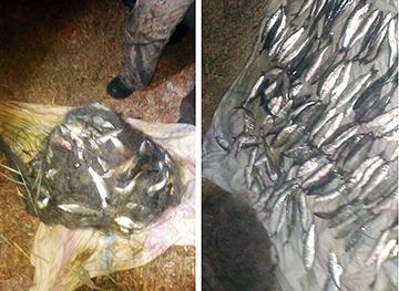 На Березанському лимані порушник завдав майже 80 тис. грн збитків